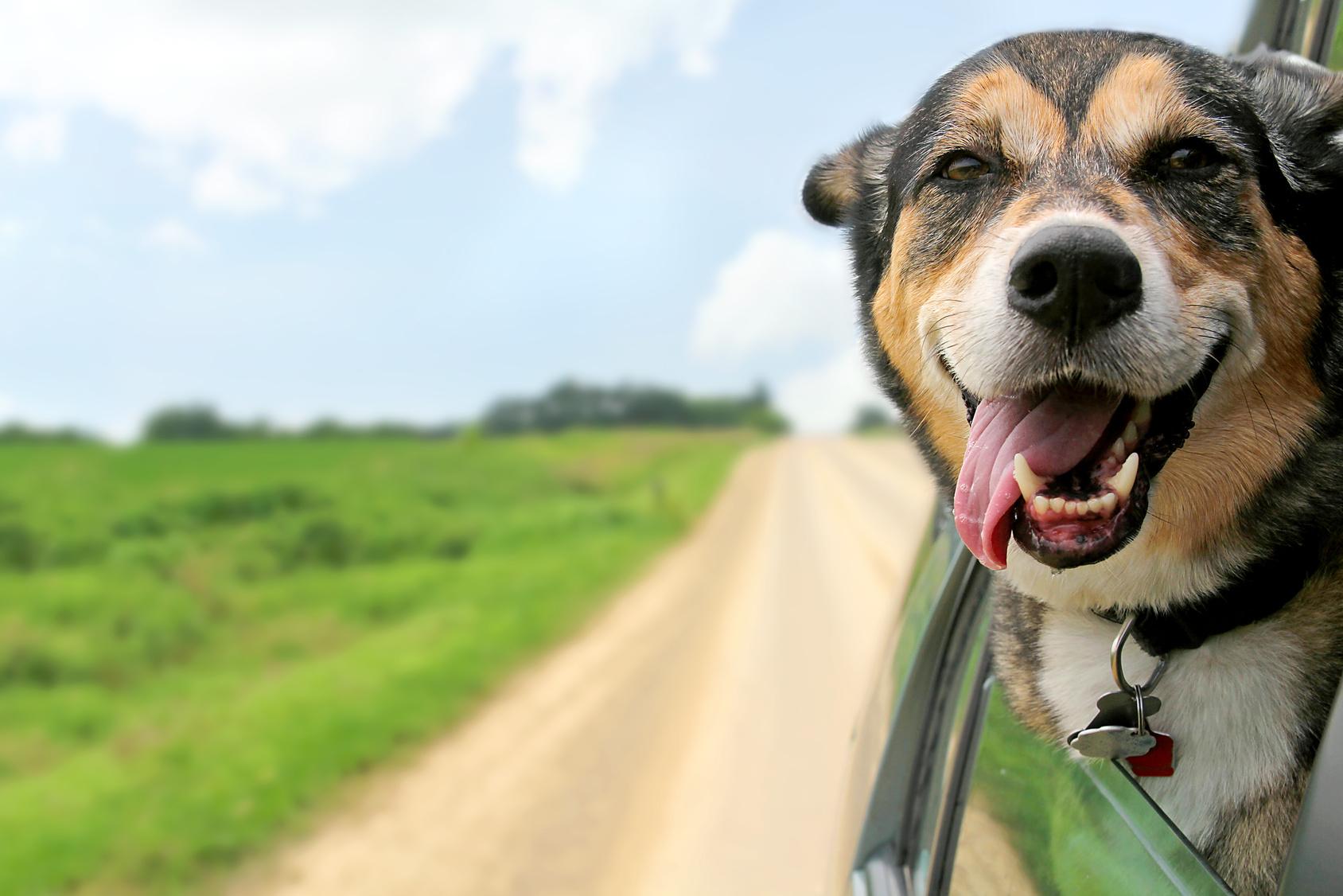 ВСША собаки угнали машину ухозяйки иврезались встену