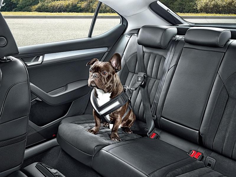 Škoda выпустила ремни безопасности для собак